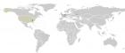 Дивіться як редагують статті у Wikipedia на інтерактивній мапі