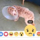 Facebook дозволить оцінювати записи не лише лайком, а й emoji-смайликами (оновлено)