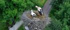 Тисячі людей в онлайні слідкують за життям лелек на Івано-Франківщині