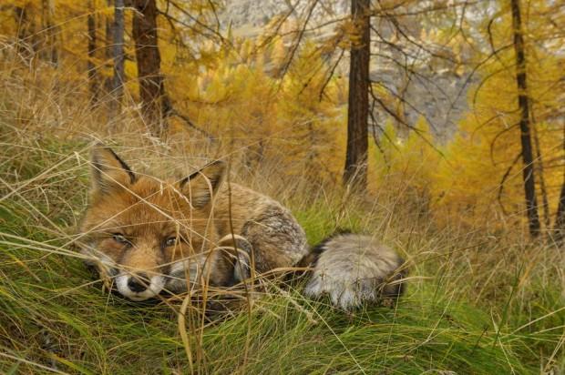 Редакція National Geographic обрала найбільш незабутні фото 2015 року